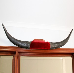 Mounted Buffalo Horns